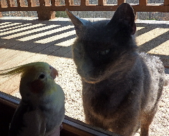 Smokey and Z Bird