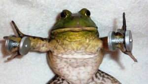 Frog lifting weights