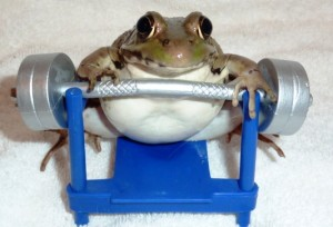 Frog work out