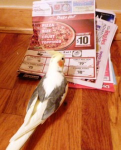 Zbird reads the paper